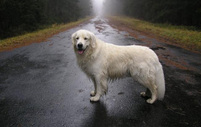 Погода на сьогодні: на півночі України місцями дощі, температура до +15