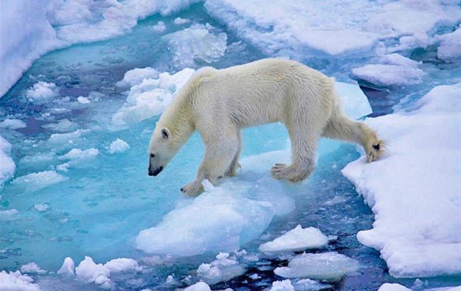Фото: Арктика