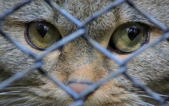 Фото: Кошка за решеткой
