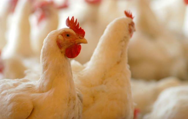 ЄС, Китай та ще 7 країн заборонили ввезення української птиці