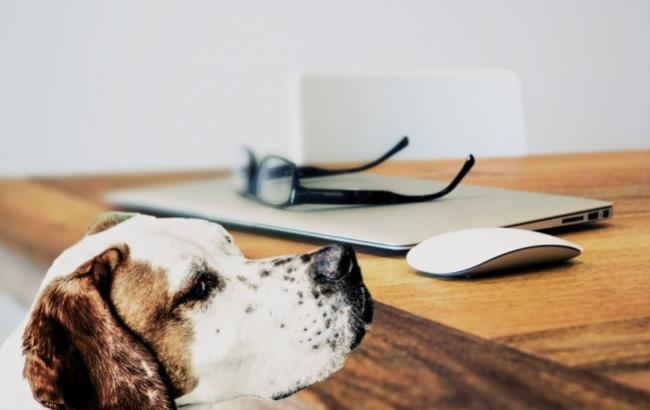 """Вчені розповіли, чому собаки """"вибачаються"""" перед людиною"""