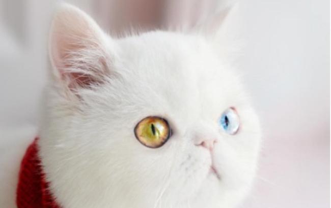 Фото: Кішка Пам-Пам (instagram.com/missypampam)