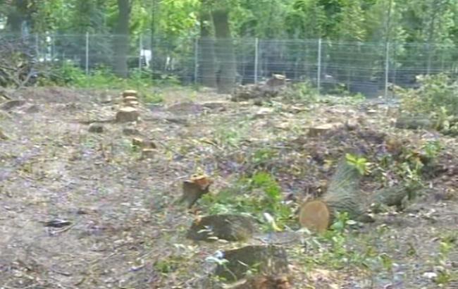 Все що залишилося від дубів (Скріншот з YouTube/5 канал)