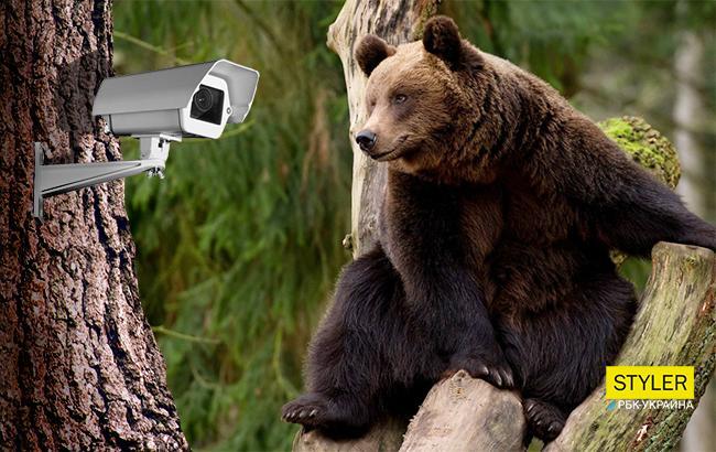 Фото: Бурый медведь с камерой (Коллаж РБК-Украина)