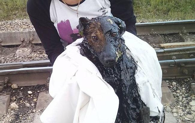 Фото: Собака в смоле (facebook.com/dimsirka)