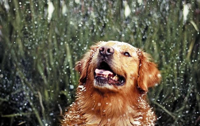 Фото: на всей территории Украины дожди