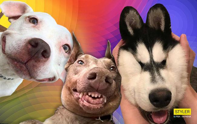 Собака-улыбака (фото: imgur.com)