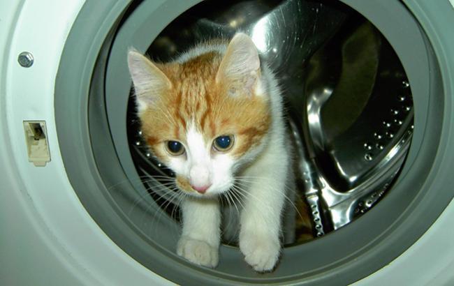 Фото: Кот (pxhere.com)