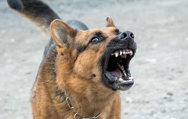 В Харькове мужчина отстреливался и спускал собак на полицию