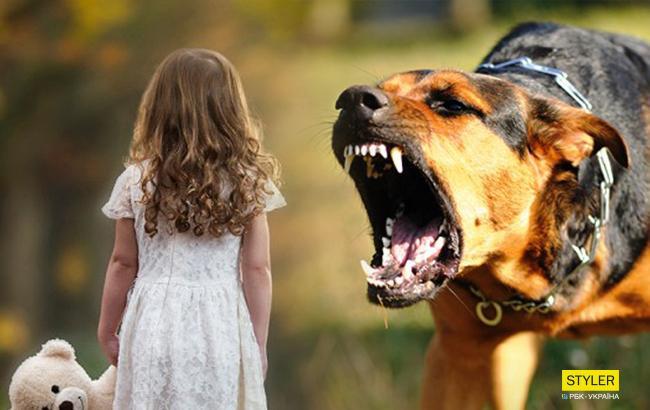 """""""Лікарі наклали 100 швів"""": стало відомо про стан дівчинки, на яку напала зграя собак"""