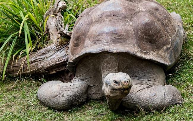 На Галапагосских островах украли более ста детенышей редких черепах