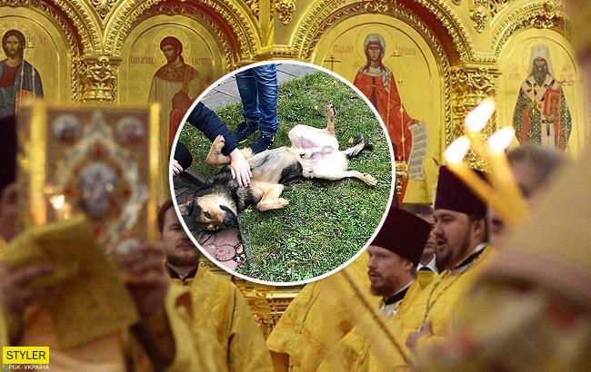 """""""Лють і злоба"""": священик вигнав із храму безпритульного пса і розізлив українців"""