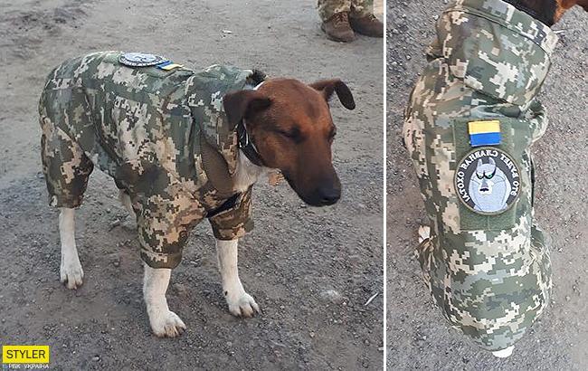 Українські військові похвалилися відважним псом, який з гідністю несе службу в лавах ЗСУ