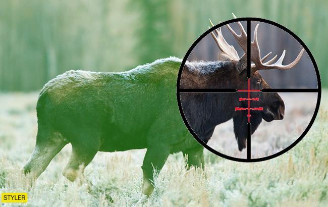 Уже не в Красной книге: украинцам разрешили охотиться на лося