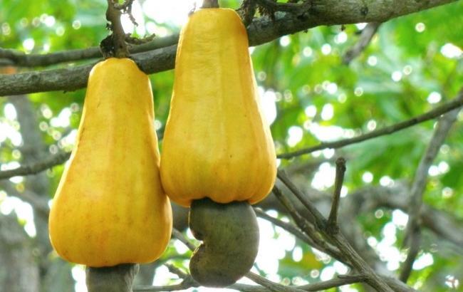 Как выращивают экзотические фрукты, овощи и пряности
