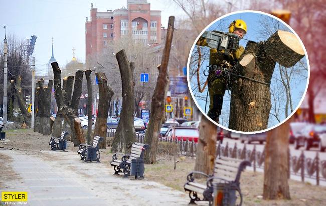 Больше никаких голых стволов: в Киеве ввели запрет на обрезку деревьев