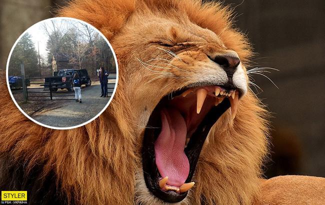 Вамериканском зоопарке лев убил 22-летнюю сотрудницу
