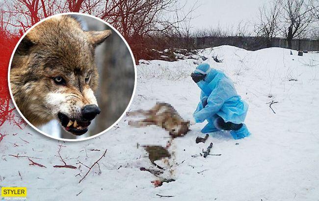 Чи був сказ: наслідки інциденту з нападом вовка під Бердянськом