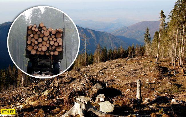 Знищення карпатських лісів виявилося брехнею: що ж відбувається насправді