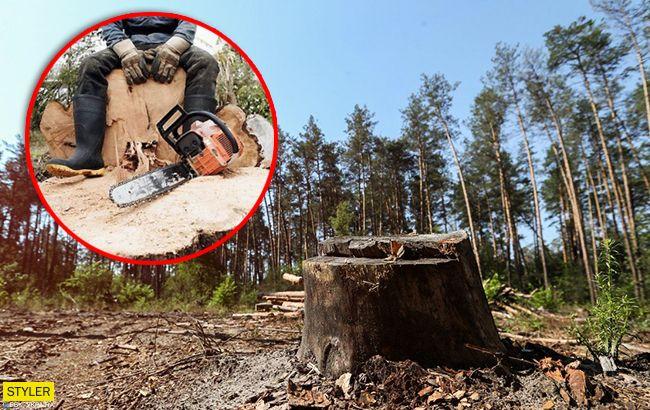 Масштаби знищення вражають: жахливі наслідки вирубки лісу в Україні
