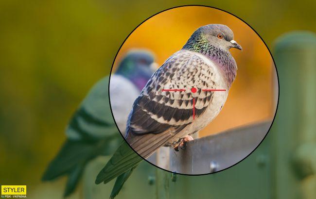 У Дніпрі жорстоко розстріляли голубів (відео)