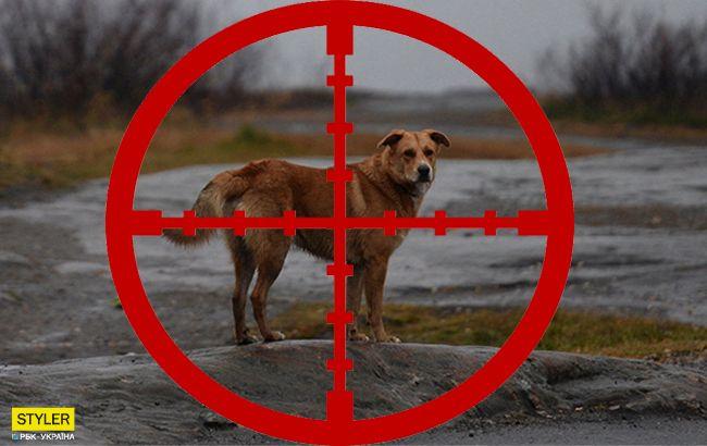Прямо на очах у дітей: у школі під Львовом чинять самосуд над собаками