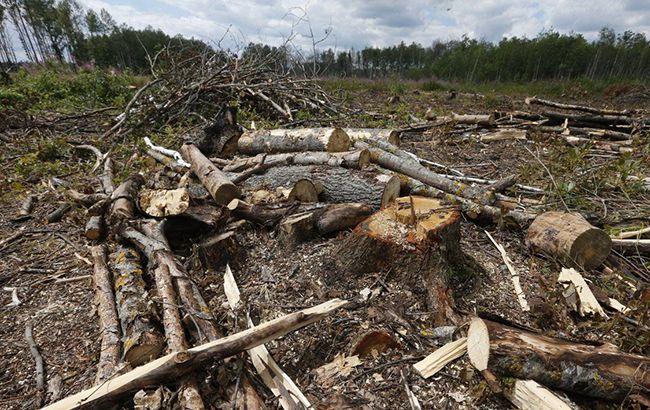 Рада ужесточила наказание за незаконную вырубку лесов