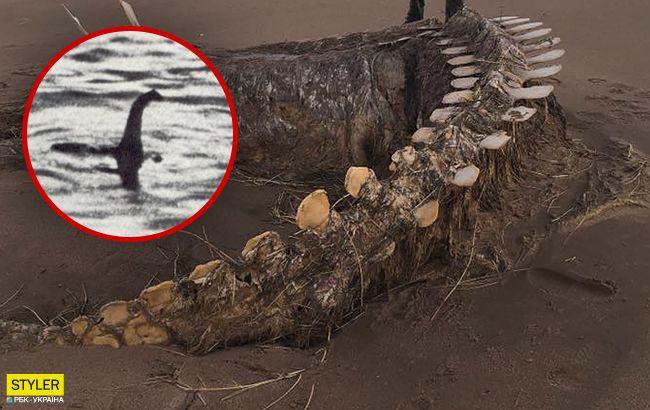 Легендарный Несси? В Шотландии наткнулись на скелет неизвестного существа (фото)