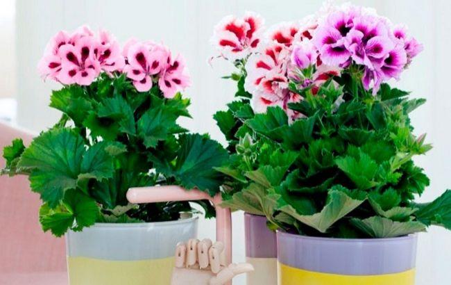 Эти комнатные растения приносят здоровье в каждый дом