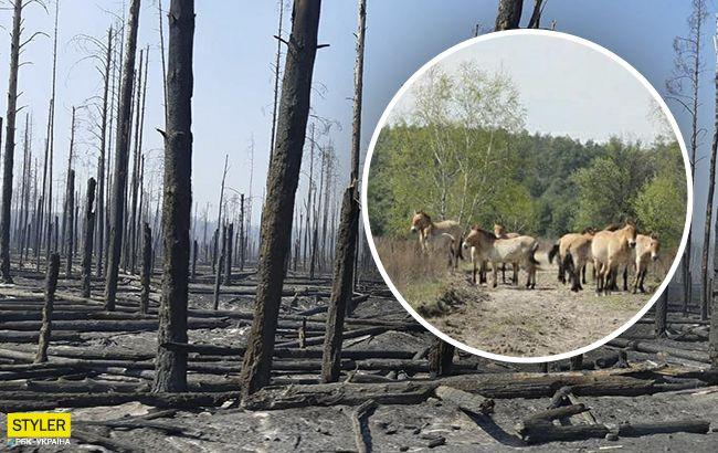"""Чернобыльская природа оживает после пожаров: яркие фото """"новой жизни"""""""
