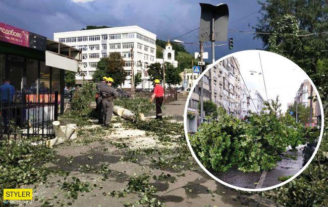 У Києві сильний вітер повалив дерева в трьох районах: фото наслідків стихії