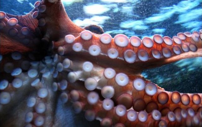 У Китаї виявили коронавірус на упакуванні морепродуктів з РФ