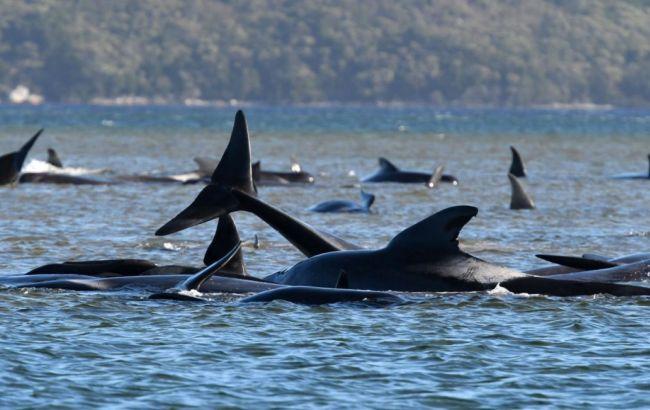 У берегов Австралии зафиксировали массовую гибель китов