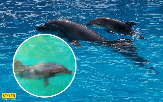В Одесском дельфинарии родился дельфиненок: невероятно милое видео