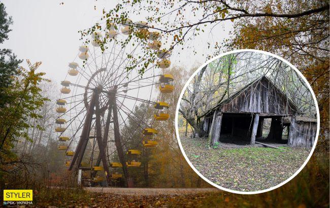 В Чернобыле показали стадо одичавших животных высотой почти в человеческий рост