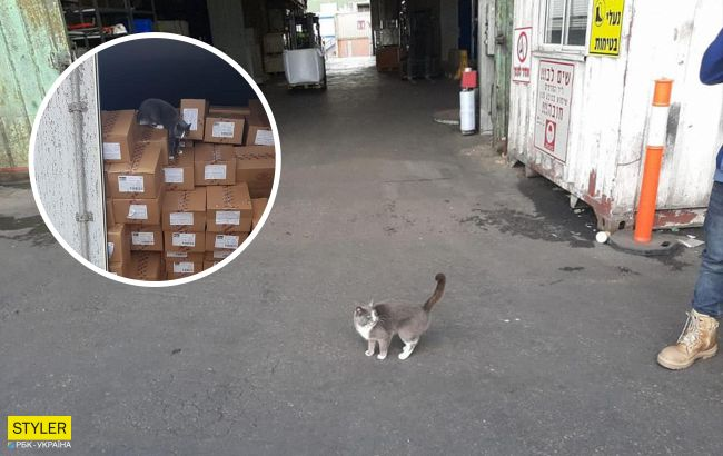 Український кіт дістався до Ізраїлю в контейнері з цукерками і став зіркою: як це вийшло