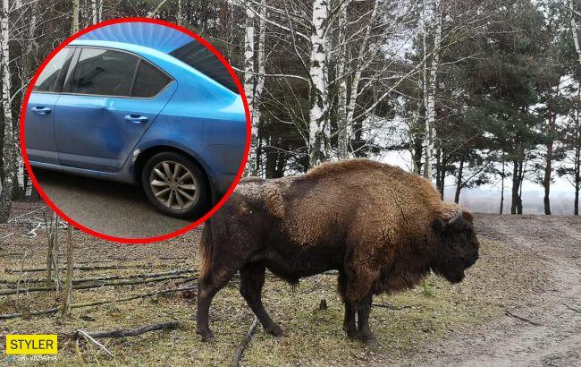 Під Києвом в еко-парку на сім'ю напало стадо бізонів: подробиці інциденту