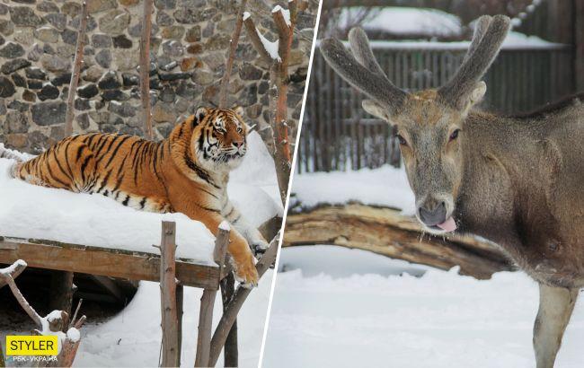 Ці неймовірно гарні фото з засніженого київського зоопарку піднімуть вам настрій