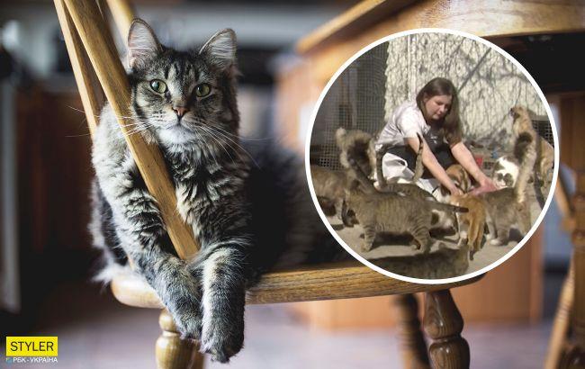 """Украинка приютила у себя дома 70 котов: """"сердце не выключишь"""" (видео)"""