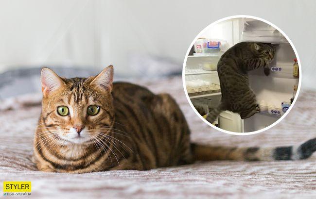 Хитрый кот из Закарпатья покорил весь мир благодаря вот этому видео