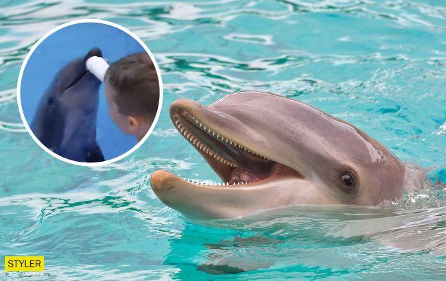 В Одесі дельфін вкусив маленьку дитину: довелося накладати шви