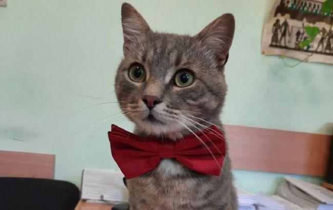 В Черновцах коммунальщики взяли на работу кота: трогательная история пушистика