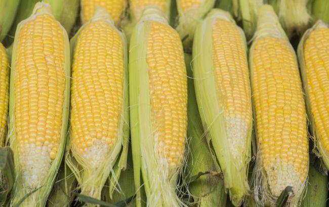 Врачи выяснили, кому строго запрещено есть кукурузу