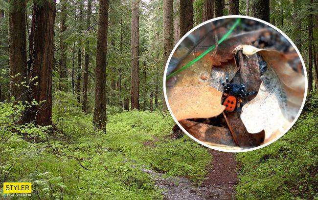 В лесу Киева нашли ядовитого паука: его укус вызывает онемение от 3 дней
