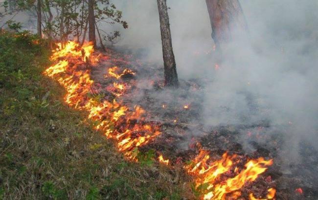 Фото: пожарная опасность в Украине