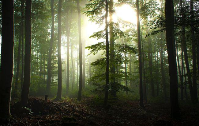Фото: за чверть століття знищена одна десята дикої природи Землі