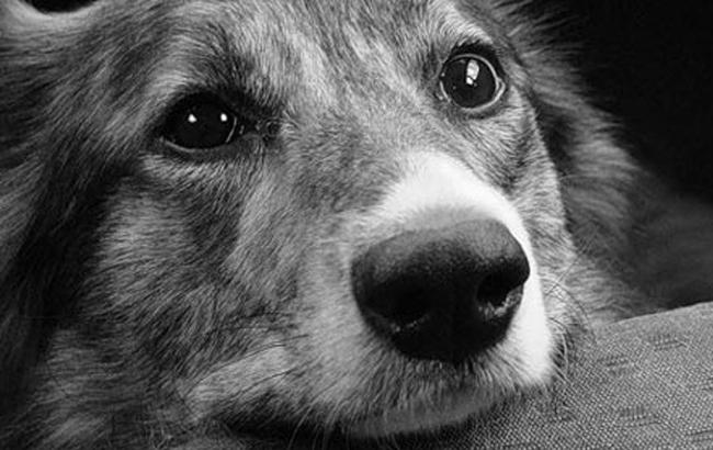 Фото: Собака (rifey.ru)