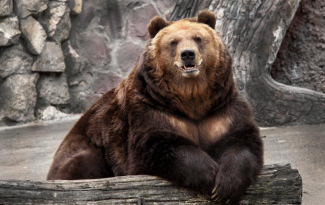 Фото: Медведь в зоопарке (wallpaperscraft.ru)