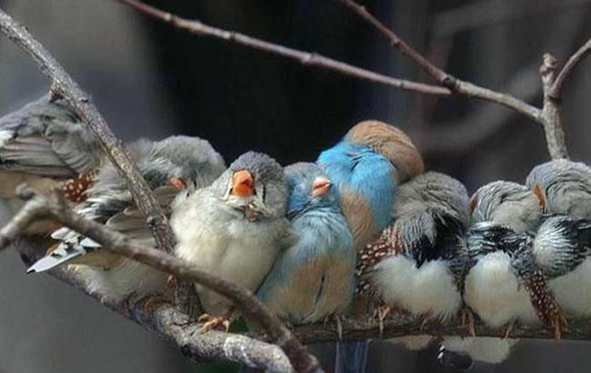 Фото: Похолодание - птицы греются (opogode.ua)