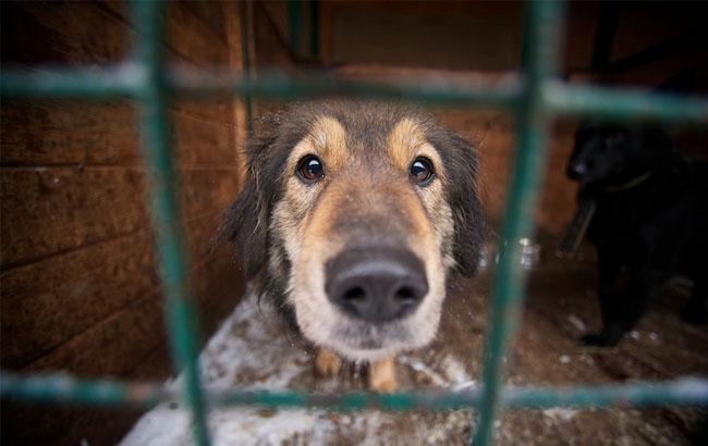 Фото: Собака в приюте (ridus.ru)